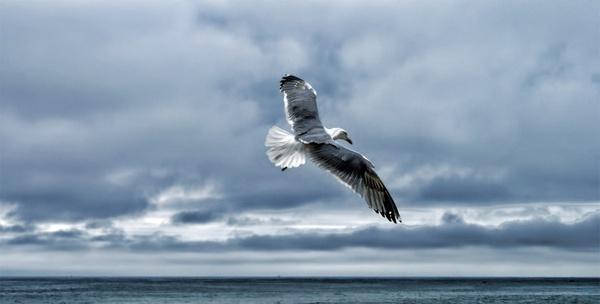 gull sea gull nature