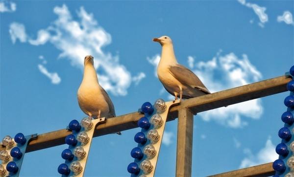gulls sea gull birds