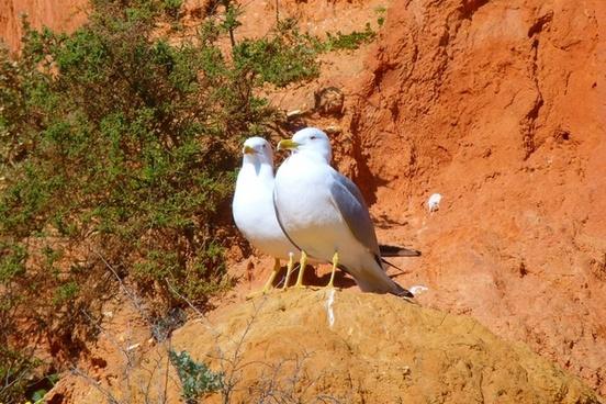 gulls waterfowl landscape