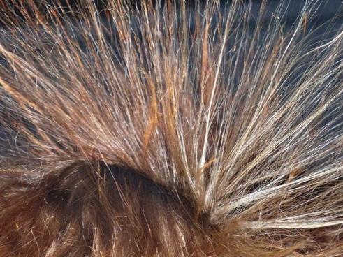 hair van de graaf generator high voltage