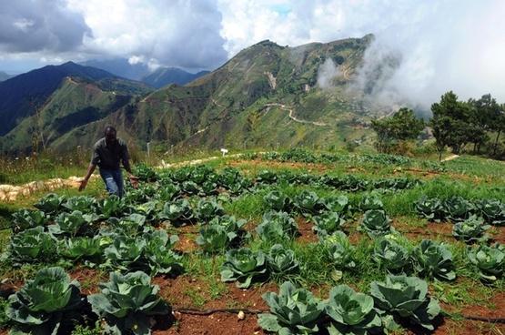 haiti landscape crops
