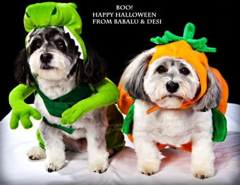 halloween hat puppy pictures