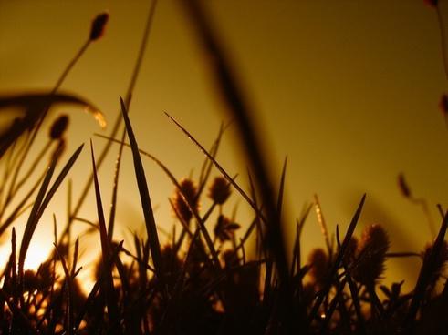 halme grass sward
