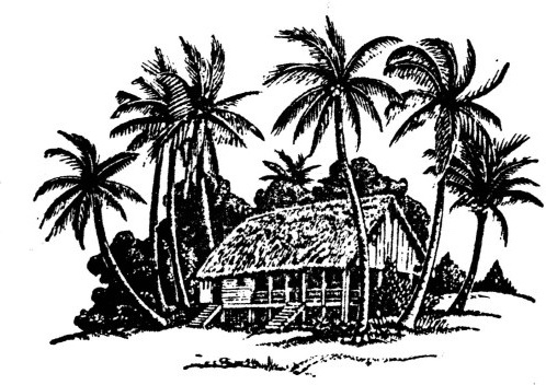 hand drawing coconut tree and house vector