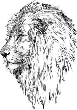 hand drawing lion vector