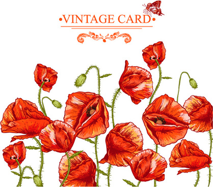 hand drawing poppies vintage card vector