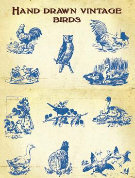hand drawing vintage birds vector