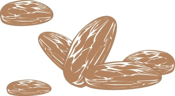 hand drawn almonds vector