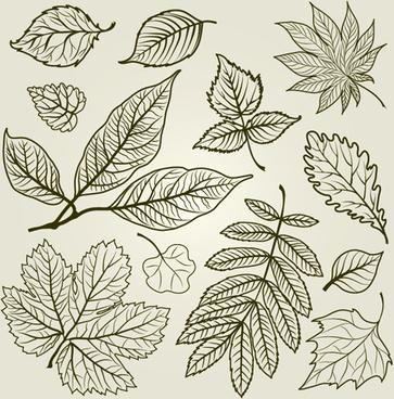 hand drawn autumn leafs vector