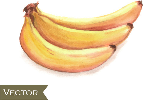 hand drawn banana watercolor vector