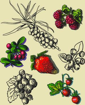 hand drawn berry creative vector