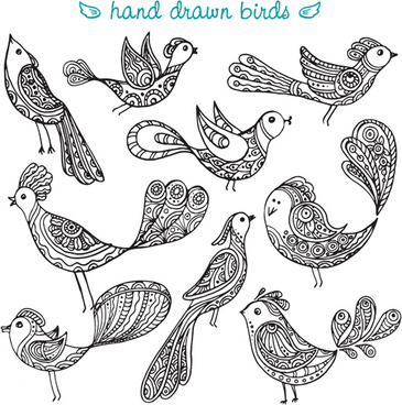hand drawn birds vector set