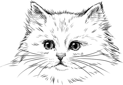 hand drawn cats head vector set