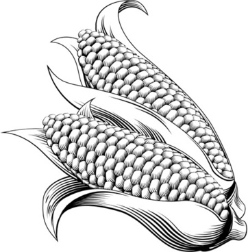 hand drawn corn vector design