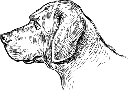 hand drawn dog art vector