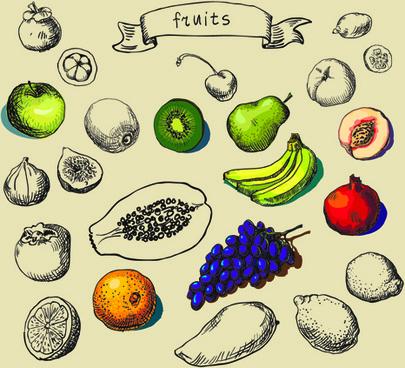 hand drawn fruit creative vector