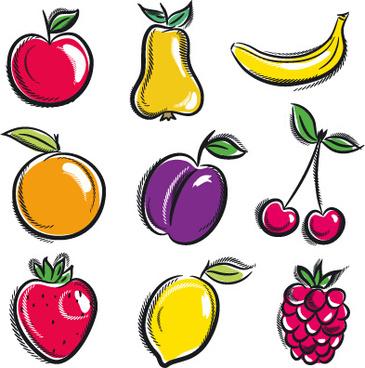 hand drawn fruits graphics vector