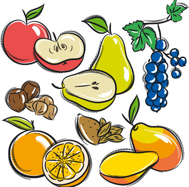 hand drawn fruits graphics vector