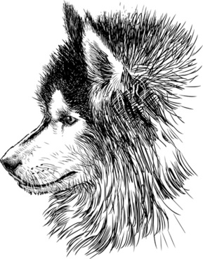 hand drawn huskies dog vector