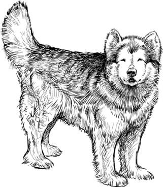 hand drawn huskies dog vector