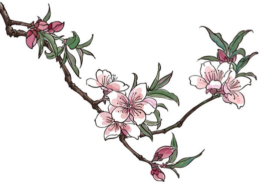 hand drawn peach blossom creative vector graphics