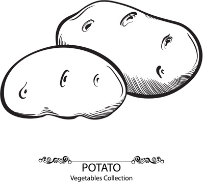 hand drawn potato vegetables vector
