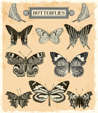 hand drawn vintage butterflies vectors set