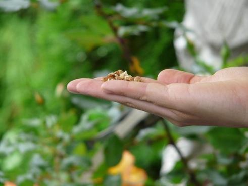 hand food feeding