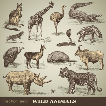 wild animals icons colored classical handdrawn sketch