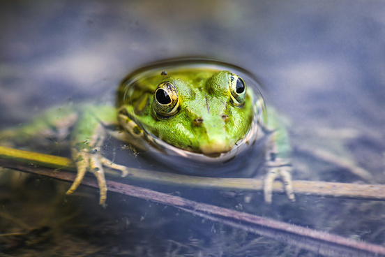 happy green frog