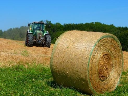 harvest harvested field