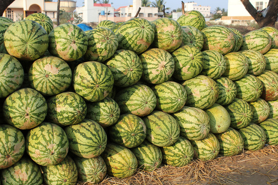 hassan melons