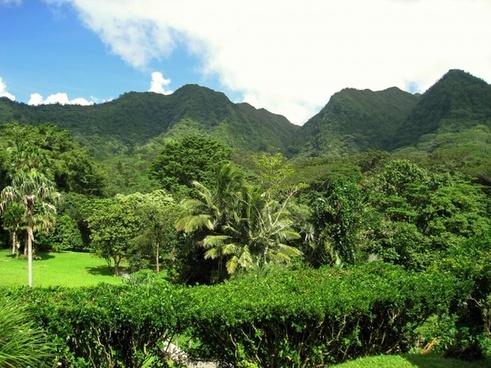 hawaii hills tree