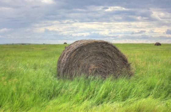 hay barrel on the fields at white butte north dakota