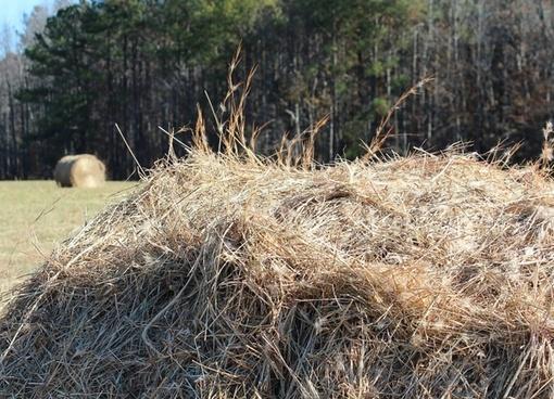 hay pile fodder dried grass