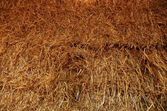 hay straw farm