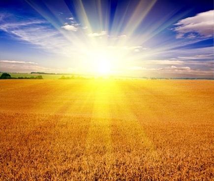 hd picture 5 of the wheat fields under the sun