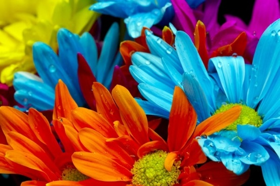 hd pictures of beautiful flowers 07