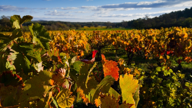 various colorful leaves on vineyard