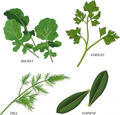 herbal foliage vector