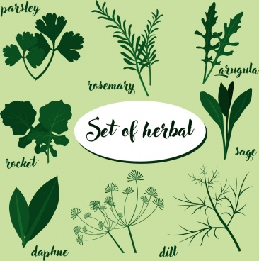 herbal icons sets various green types
