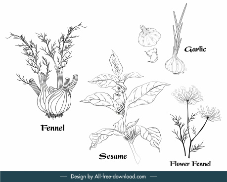 herbal ingredients icons black white handdrawn outline