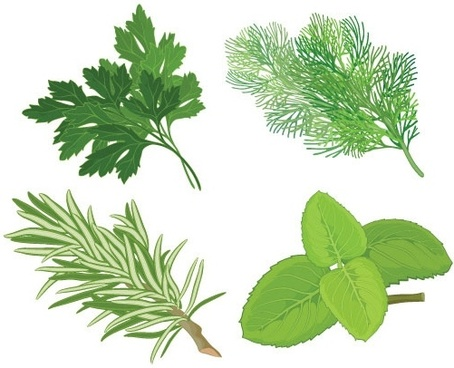 herbal leaves 04 vector