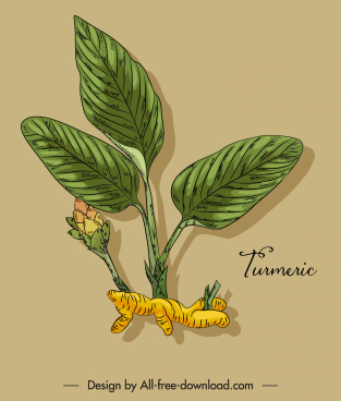 herbal turmeric icon colored classic handdrawn sketch
