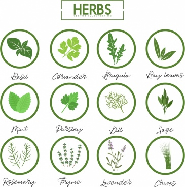 herbs icons collection various green symbols isolation