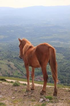 herd horses landscape