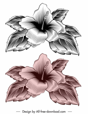 hibiscus flora icon elegant retro sketch