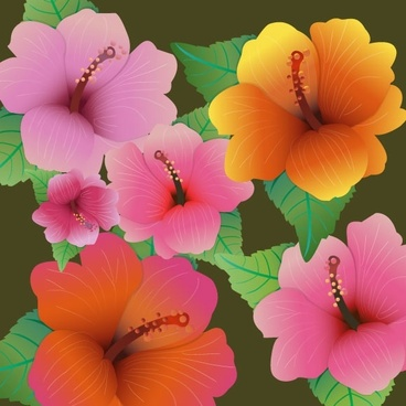 hibiscus flowers vector design with color style