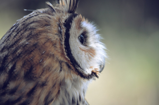 high resolution owl background