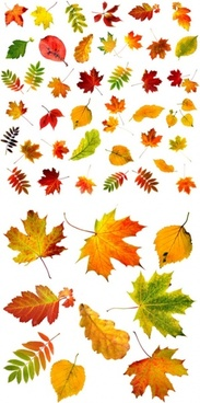 highquality pictures of autumn leaves
